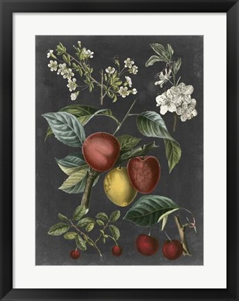 Framed Orchard Varieties III Print