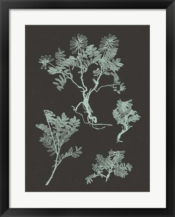 Framed Mint & Charcoal Nature Study II Print