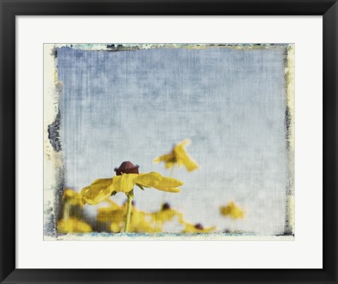 Framed Blackeyed Susans I Print