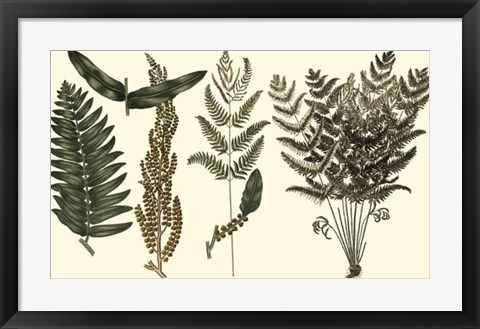 Framed Fern Leaf Folio I Print