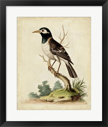 Framed Solitary Perch II Print