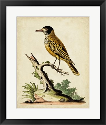 Framed Solitary Perch IV Print
