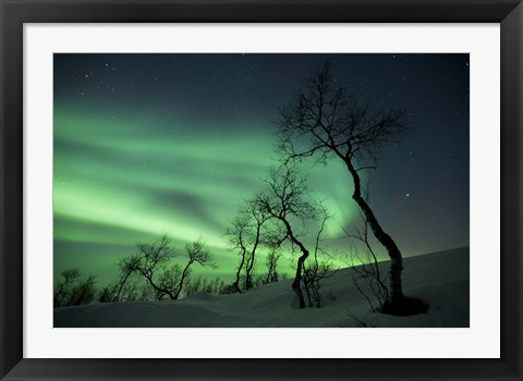 Framed Northern Lights in the arctic wilderness, Nordland, Norway Print