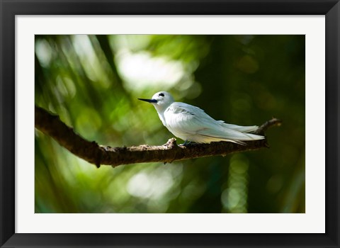 Framed Fairy Turns on Fregate Island, Seychelles Print