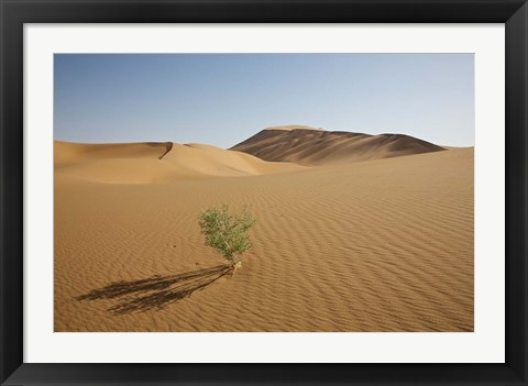 Framed China, Gansu Province. Lone plant casts shadow on Badain Jaran Desert. Print