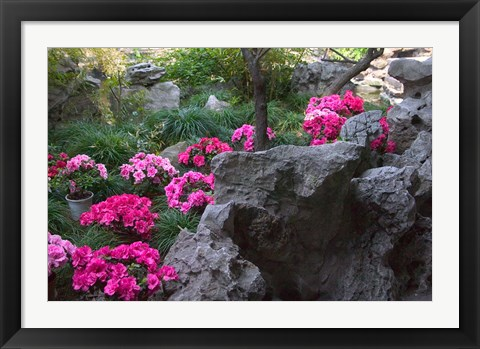 Framed Flowers and Rocks in Traditional Chinese Garden, China Print