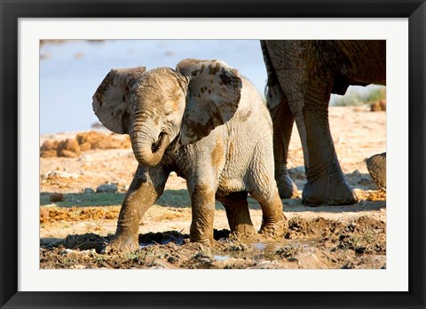 Framed Baby African Elephant in Mud, Namibia Print