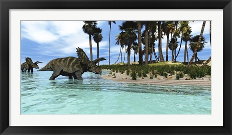 Framed Two Coahuilaceratops dinosaurs wade through tropical waters Print