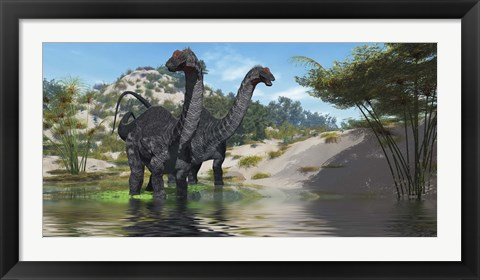 Framed Two Apatosaurus dinosaur wade through a lush pond Print