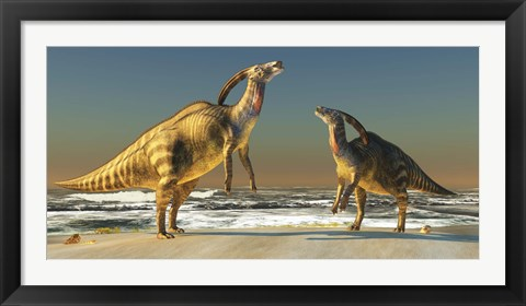 Framed Two Parasaurolophus dinosaurs bellow at each other Print