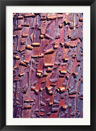 Framed Madrone Tree Bark Abstract pattern Print