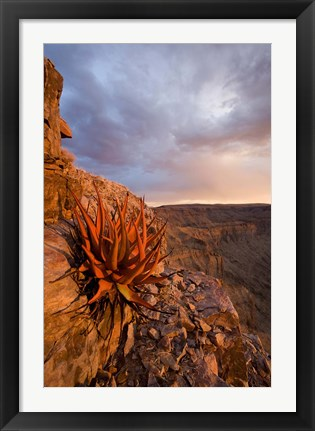 Framed Namibia, Fish River Canyon National Park, close up of adesert plant Print