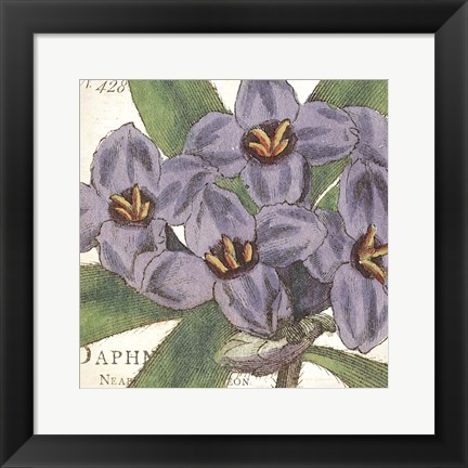 Framed Purple Floral Print