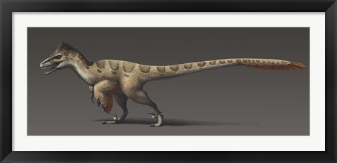 Framed Utahraptor ostrommaysorum, the largest known dromaeosaur Print