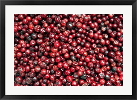 Framed Asia, India, Darjeeling. Red berries, Fresh Fruits Print