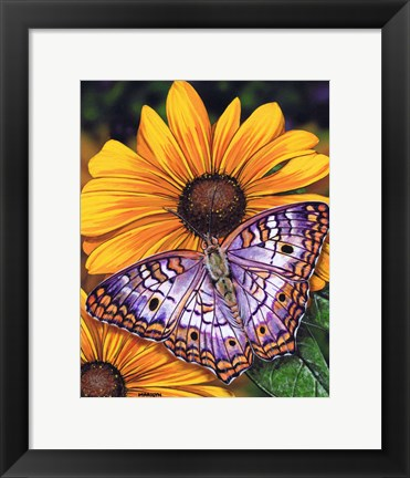 Framed White Peacock Butterfly Print