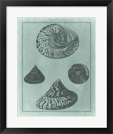 Framed Spa Shell Collection II Print
