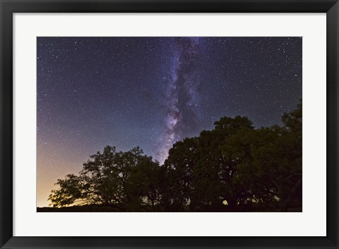 Framed Milky Way Above LiveOoak and Mesquite Trees Print