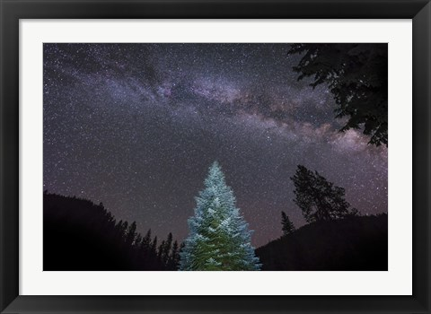 Framed Pine Tree Glows Under the Arch of the Milky Way Print