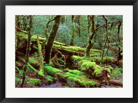 Framed Cradle Mt and Lake St Clair National Park, Tasmania, Australia Print