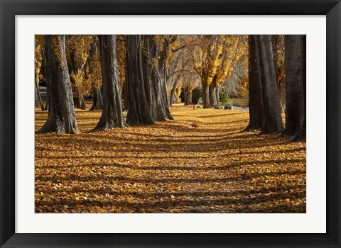 Framed Poplar Trees in Autumn, Lake Wanaka, Otago, South Island, New Zealand Print