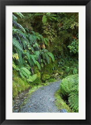 Framed Ferns and Path, Lake Matheson, South Island, New Zealand Print