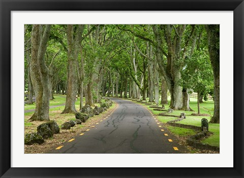 Framed Twin Oaks Drive, Paths, North Island, New Zealand Print
