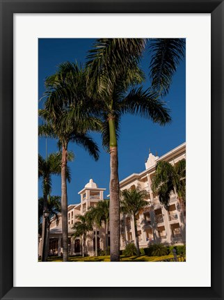 Framed Palm tree, Riu Palace, Bavaro Beach, Higuey, Punta Cana, Dominican Republic Print