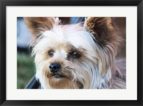Framed Waitching Dog with Intent Print