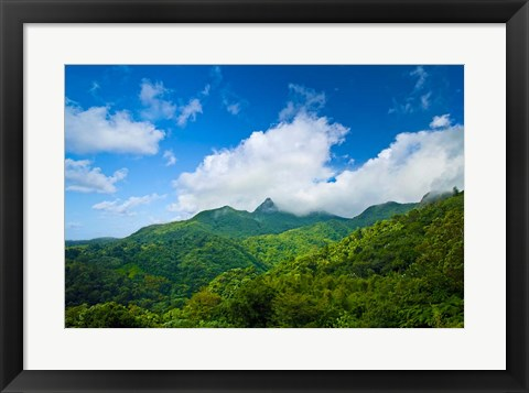 Framed Puerto Rico, El Yunque National Forest, Rainforest Print
