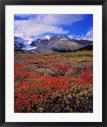 Framed Alberta, Columbia Icefields, Huckleberry meadows Print