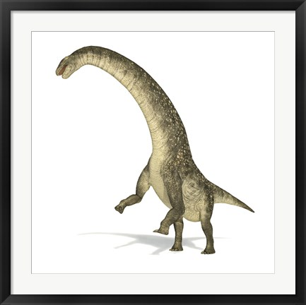 Framed Titanosaurus Dinosaur on White Background Print