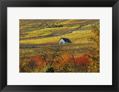 Framed House of Vines Print