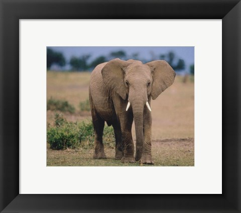 Framed Elephant In Green Field Print