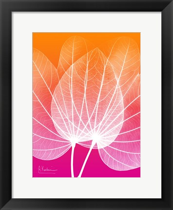 Framed Orchid Tree Pink Orange 1 Print