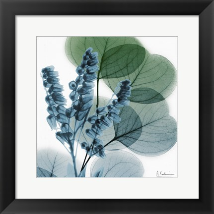 Framed Lilly Of Eucalyptus Print