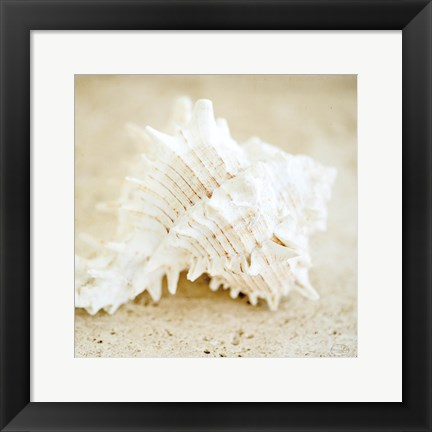 Framed Seashore Shells II Print