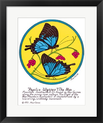 Framed Blue Mountain Swallowtail Print