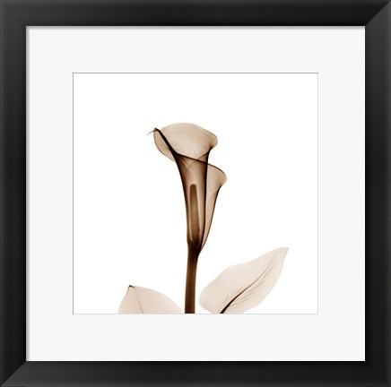 Framed Calla Lily in Sienna 2 Print