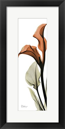Framed Terracotta Calla Lily Print