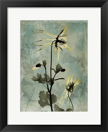 Framed Columbine Grey Print