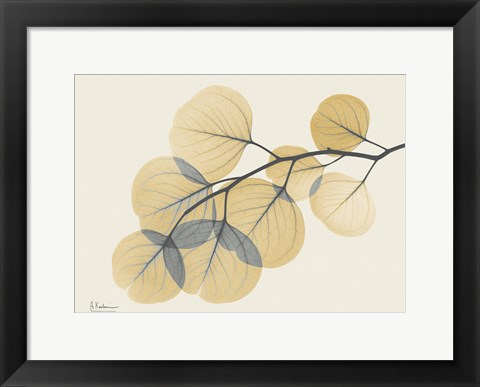 Framed Yellow Eucalyptus Print