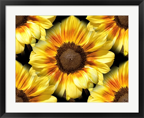 Framed Sunflower 26 Print