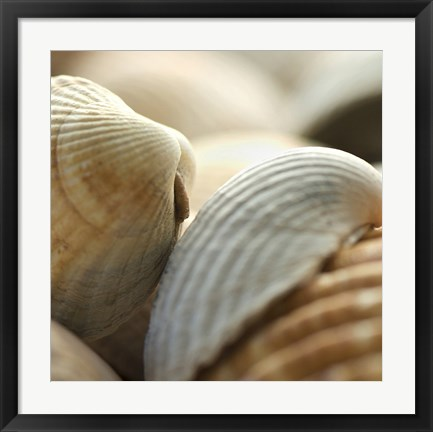 Framed Shells 4 Print