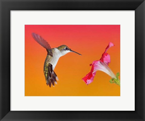 Framed Flower Dance I Print