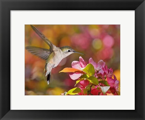 Framed Flower Dance IX Print