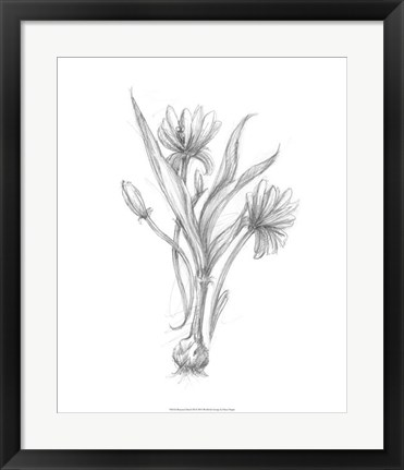 Framed Botanical Sketch III Print