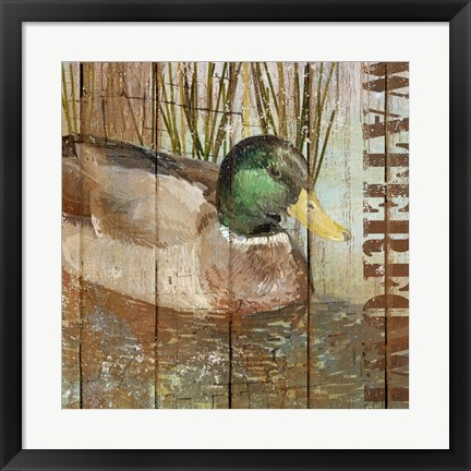 Framed Open Season Mallard Print