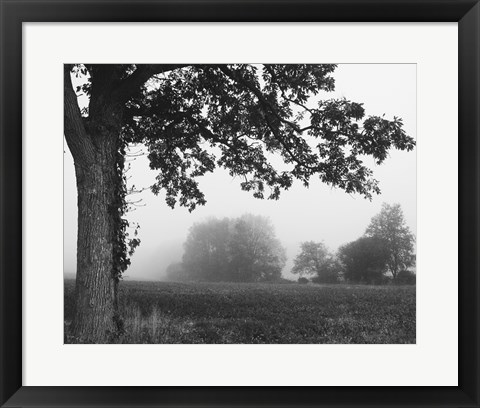 Framed Over the Meadow Print