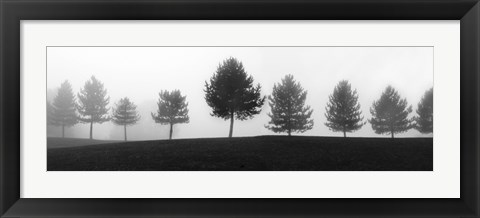 Framed Tree Line Print